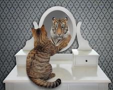 Hogyan ismerjük fel a narcisztikus személyiségzavart?